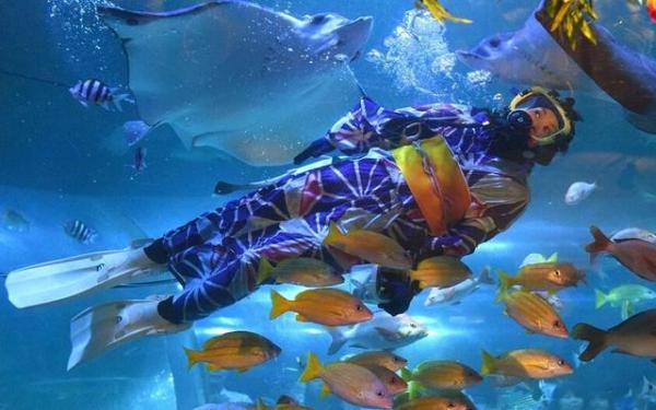 水族馆职员穿夏季和服潜水喂鱼(网页截图) 水族馆职员穿夏季和服潜水喂鱼(网页截图) 国际在线专稿:据法新社6月29日报道,日本将迎来一年一度的七夕节(7月7日)。每年的七夕节,日本女孩都会穿上夏季和服参加烟花大会等活动。近日,位于东京品川的一家水族馆也举办了七夕水中秀活动迎接这一节日。 活动中,女性潜水员身穿华丽的夏季和服潜入水中为鱼群喂食。潜水员进入水族箱后,五颜六色的鱼儿环绕着她游来游去,鱼群与色彩鲜艳的夏季和服互相映衬,十分漂亮。 此次表演不仅让参观者享受了一场五彩斑斓的水中视觉盛宴,也让大家切身