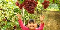 葡萄成熟季又到采摘时,一起去乡趣园摘葡萄了! - 青海热线