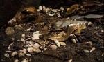 """美国《考古》2017十大考古发现:黄金""""战狼""""来了 - 社科院"""
