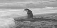 长江源头首次拍到欧亚水獭捕鱼影像 专家:表明该区域内河流生态系统健康完整 - 建设厅