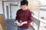 郭氏兄弟 互助信鸽的领头人 - Qhnews.Com