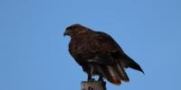 贵南茫曲国家湿地公园开展首次鸟类调查 - Qhnews.Com
